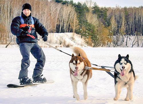 Чернігівські екстремали запрягають... хаскі у сноуборд
